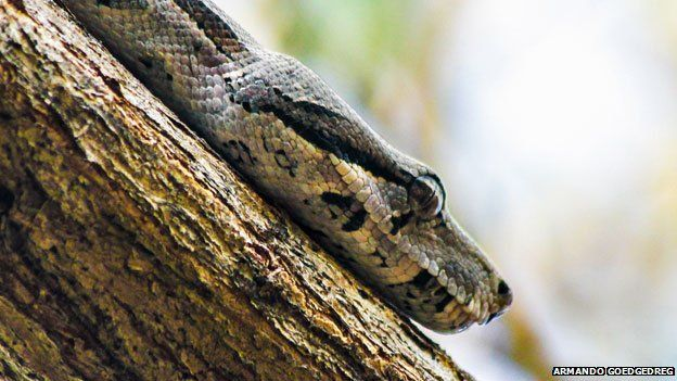 A snake in a tree