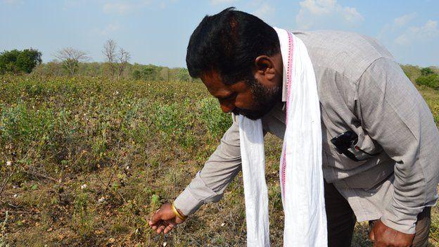 Indian farmer Bhaskar Deovalvar and a ruined cotton crop