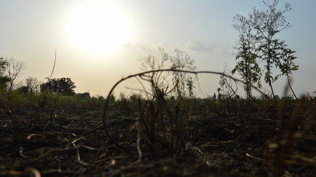 drought-hit crop
