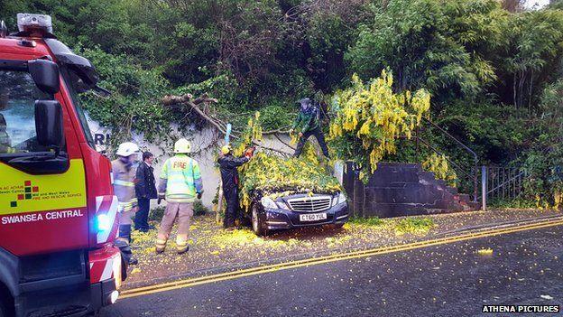 Collapsed tree Swansea
