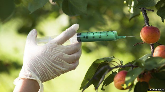 A gloved hand injecting an apple