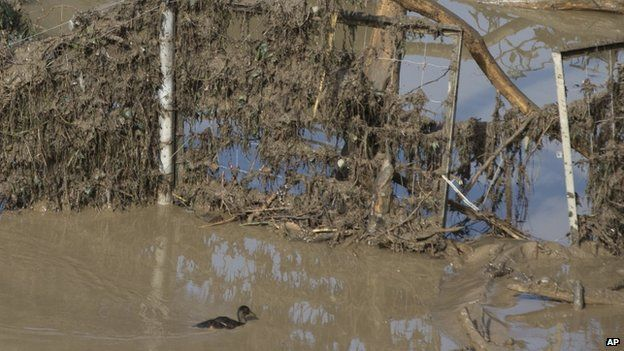 A duck swims in the mud at a flooded zoo area in Tbilisi, Georgia, on 15 June 2015.