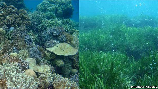 Coral and seagrass