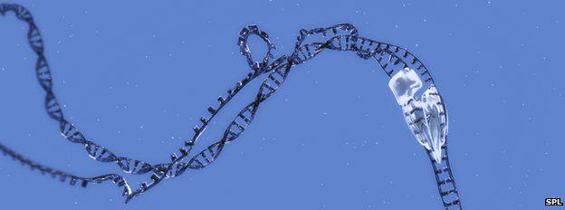Artwork of RNA transcription
