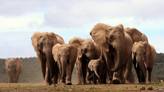 Elephants pictured in a park in South Africa (Archive shot - November 2009)