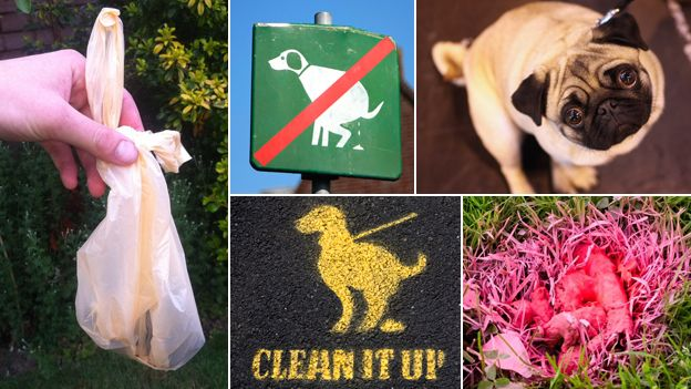 """Composite pictures including a dog poo bag, a """"clean it up"""" sign, and a guilty looking dog"""