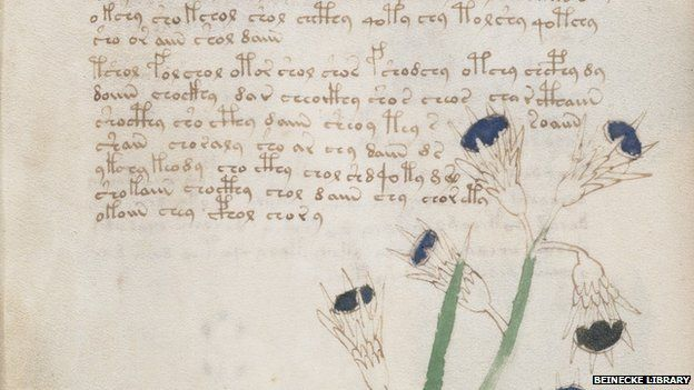 Voynich Manuscript - detail