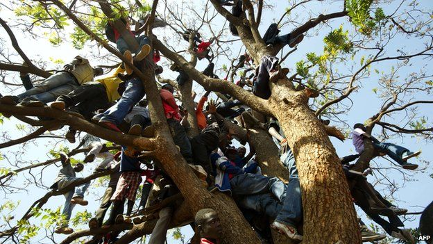 Supporters of Zimbabwe's prime minister climb up a tree during an election rally in Harare on 29 July 2013