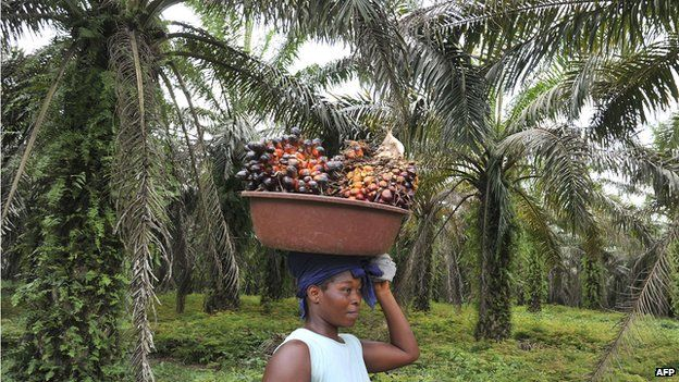 A labourer carries freshly cut palm fruits to be used in making palm oil at a plantation in Ivory Coast (6 June 2013)