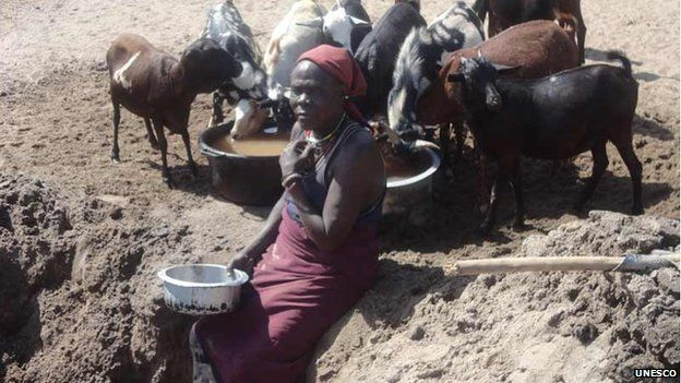 A Turkana Woman scoops water from the sandy bed of River Taraj for her goats, Kenya