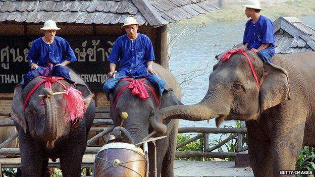 Elephants play drum