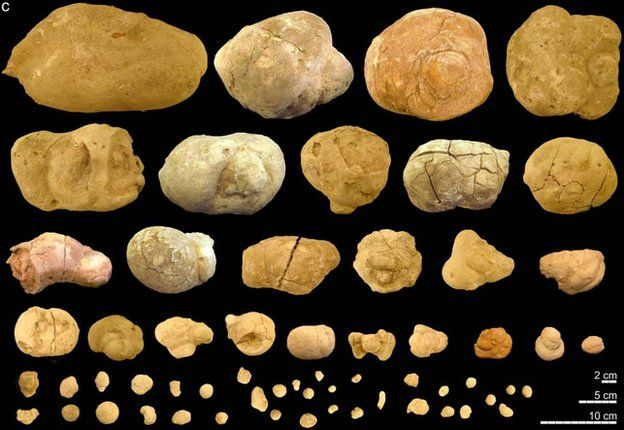 Diversity of coprolite shapes and sizes from several communal latrines