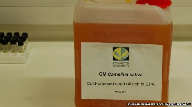Fish oil extracted from plant seeds - BBC News