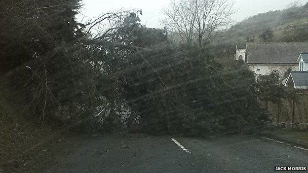 A tree came down on the road between Laugharne and Pendine