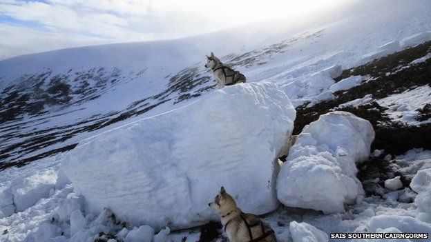 Dogs give scale of avalanche debris in Southern Cairngorms