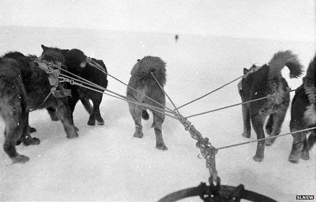 Dogs pull a sled ridden by Xavier Mertz