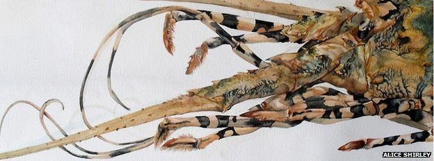 Detail of 'Giant Lobster' from NHM specimen collection