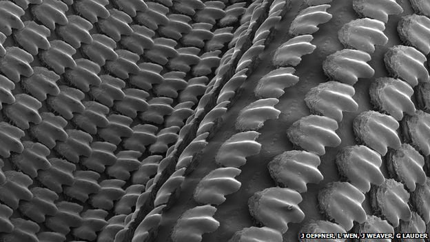 A scanning electron micrograph (SEM) of the 3D-printed shark skin