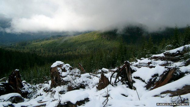 Headwaters of Tsitika River watershed on Northern Vancouver Island, British Columbia, December 2005. Temperature increases will affect the hydrological system in particular in rain/snow transition zones.
