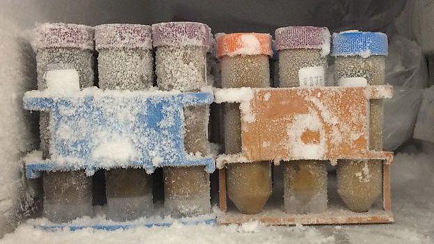 Vials of frozen faecal matter