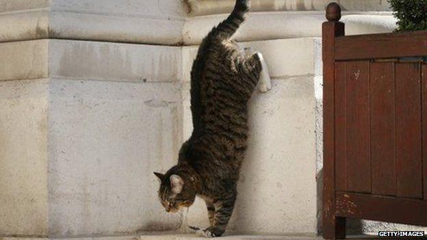 Freya, George Osborne's family cat