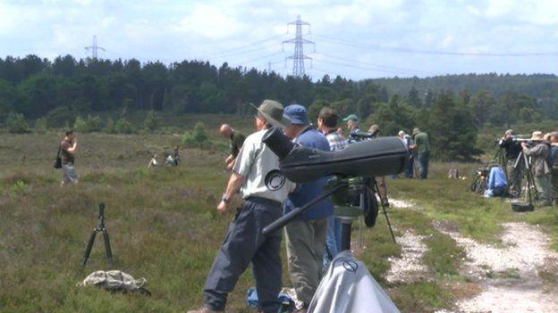 Bird watchers at Morden Bog, near Wareham