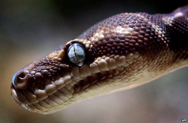 Rough scale python