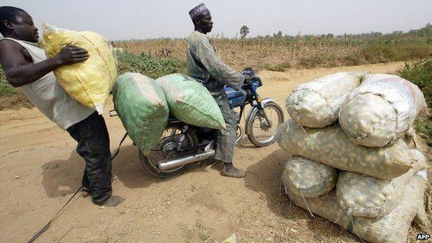 A man loading vegetable on a bike at Buruku, in Kaduna State, Nigeria (February 2006)