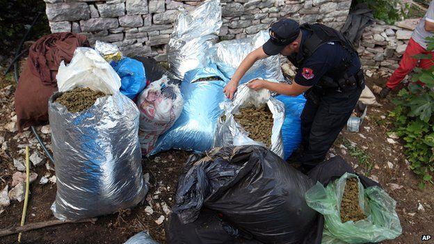 Albanian police officers seize considerable amounts of marijuana in Lazarat on 20 June 2014