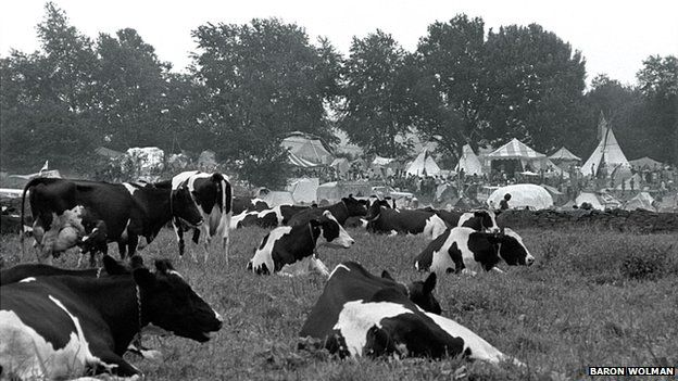 Woodstock cows