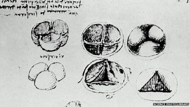 What Leonardo Taught Us About The Heart Bbc News