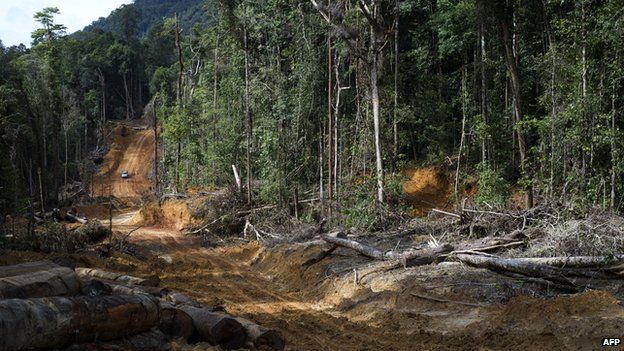 This photo taken on 13 November 2013 shows a timber company's vehicle driving down a dirt road in the forests of in Berau, East Kalimantan.