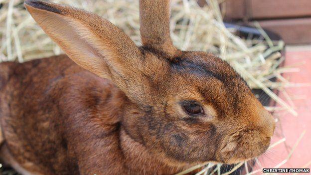 Atticus the hare