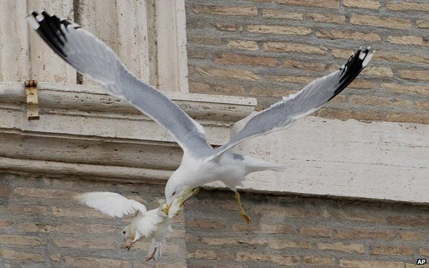 Gull attacking a dove in the Vatican