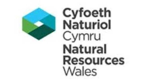 Symbol Cyfoeth Naturiol Cymru