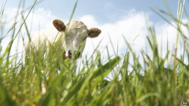 Can eating meat be eco-friendly?