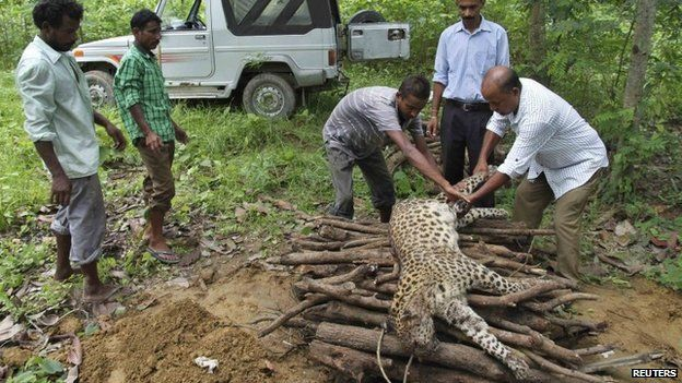 Indian woman kills leopard that attacked her - BBC News