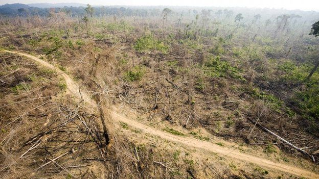 Figures confirm Amazon rainforest destruction rate - BBC News