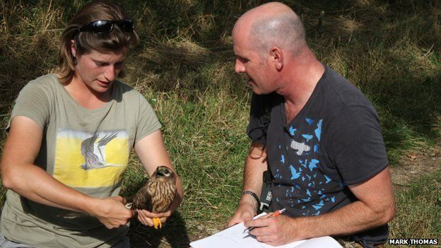 The missing Montagu's harrier, woman, Mike Dilger