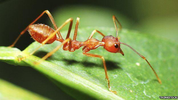 An ant on a leaf