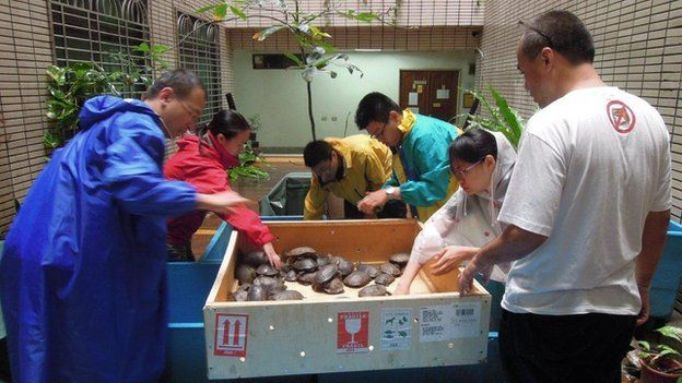 PROTECTED TURTLES RESCUED FROM SMUGGLERS