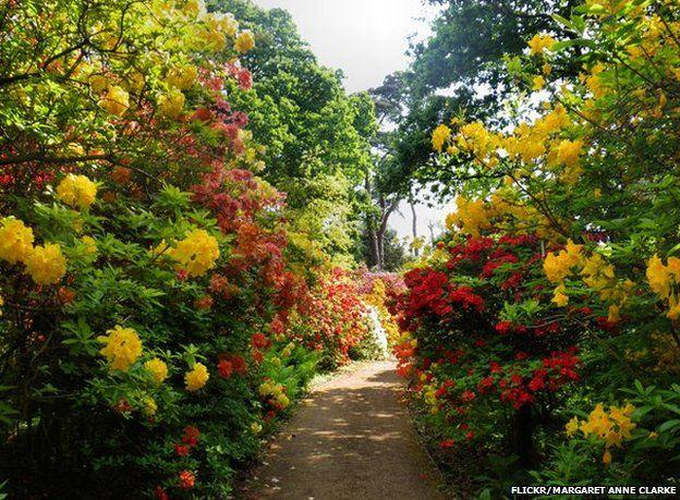 Path through azalea bushes, Sir Harold Hillier Gardens