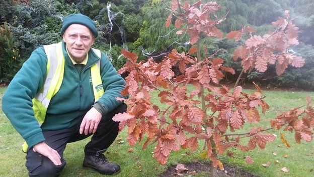 Gardener Jon Warren planted an acorn from the 1,000-year-old tree to grow 'Allerton Oak the Younger'