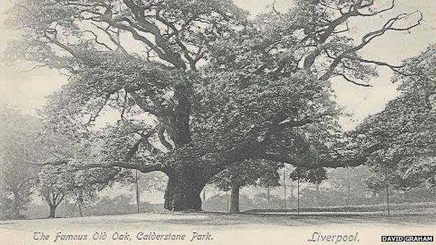 A postcard from 1900 shows 'The Famous Old Oak'
