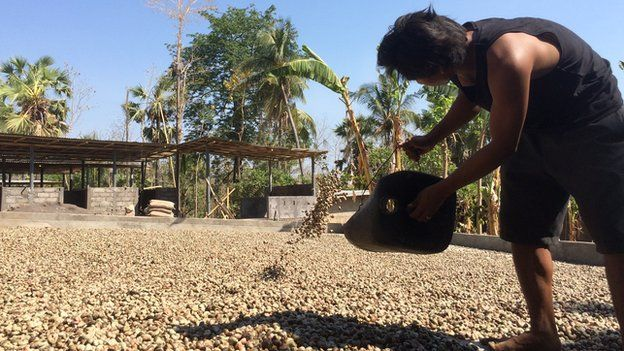 East Bali Cashews factory