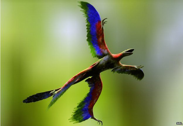 Microraptor is a feathered dinosaur discovered in the Early Cretaceous period (128-124 million-year-old)