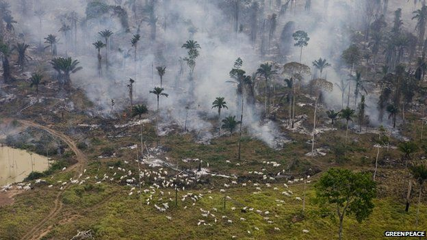 Fires to clear land for agriculture in Sao Felix Do Xingu municipality, Para, Brazil - June 2009