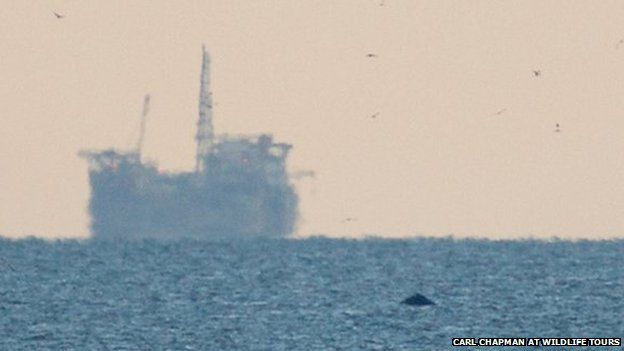 Boat and humpback whale off Norfolk coast