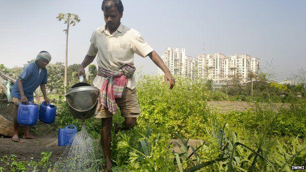 Urban farmers, India (Image: IWMI)