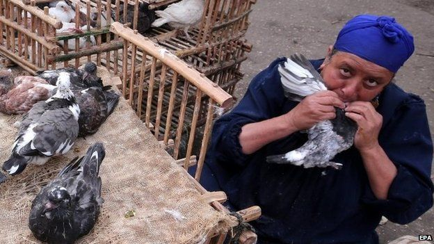 An Egyptian woman feeds a pigeon from her mouth at a market in Cairo (19 November 2014)